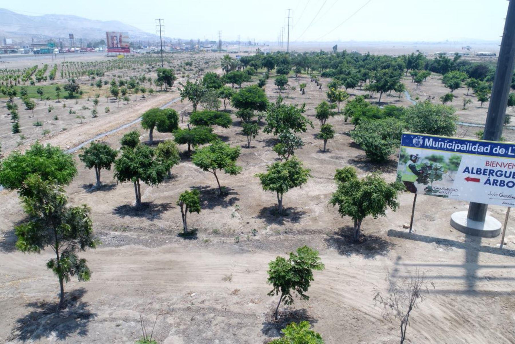 Albergue de árboles en Ancón. Foto: Andina/Difusión