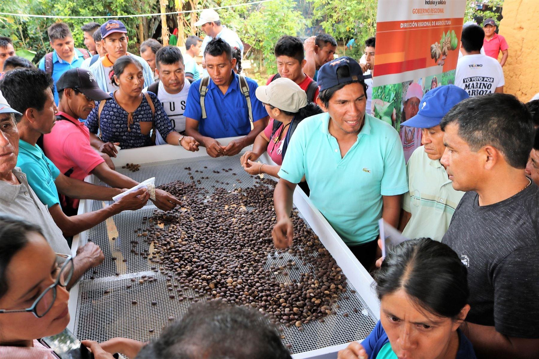 San Martín incrementa en un 86% producción de sacha inchi gracias a tecnología. ANDINA/Difusión