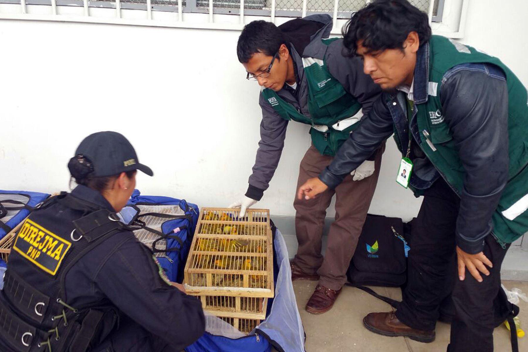 Más de 10,000 animales vivos fueron rescatados del tráfico de fauna silvestre durante 2017, revela el Serfor. ANDINA/Difusión