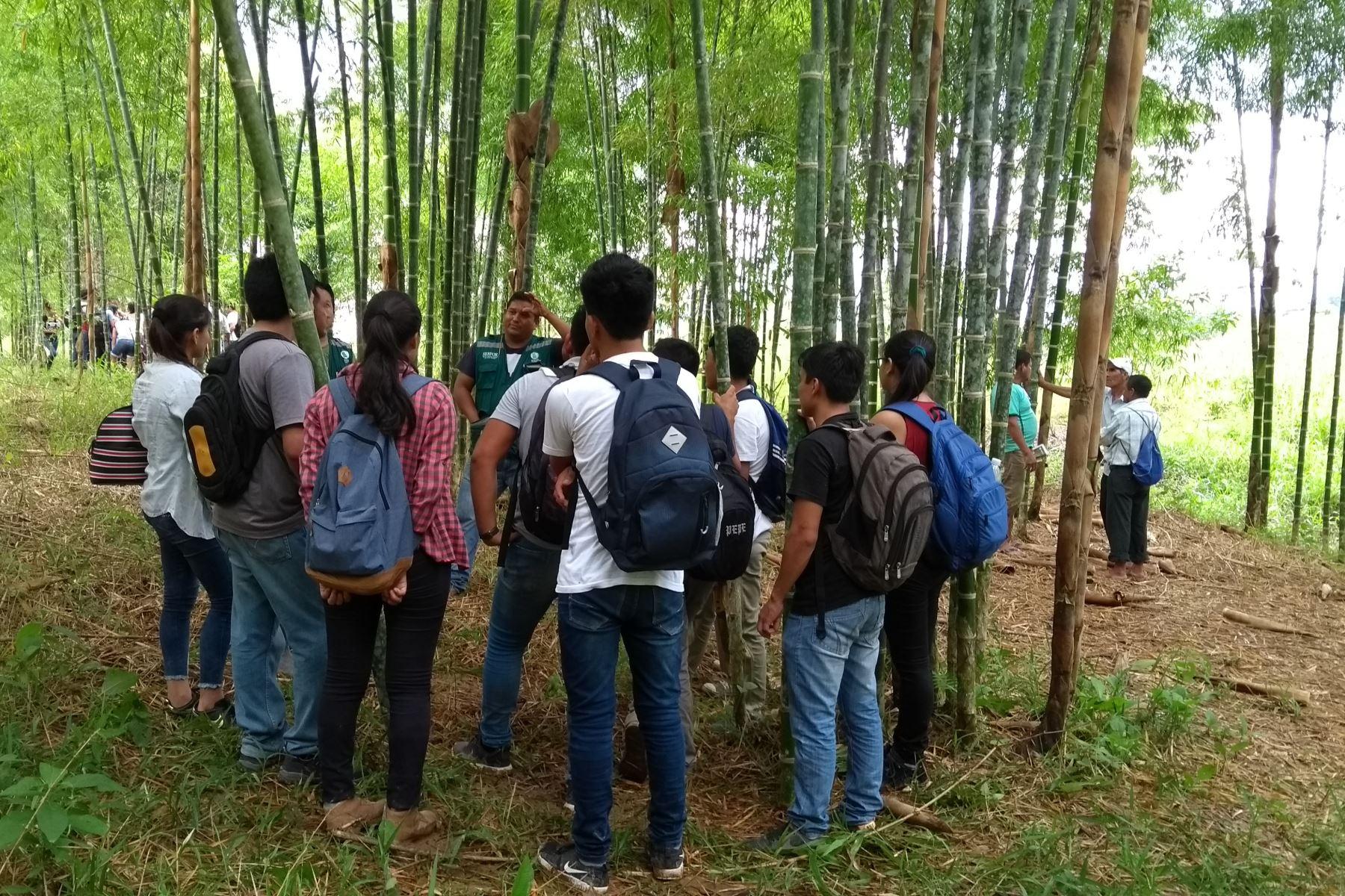 Los productores de Cajamarca y Amazonas apuestan por el bambú y fortalecer su cadena productiva. ANDINA/Difusión