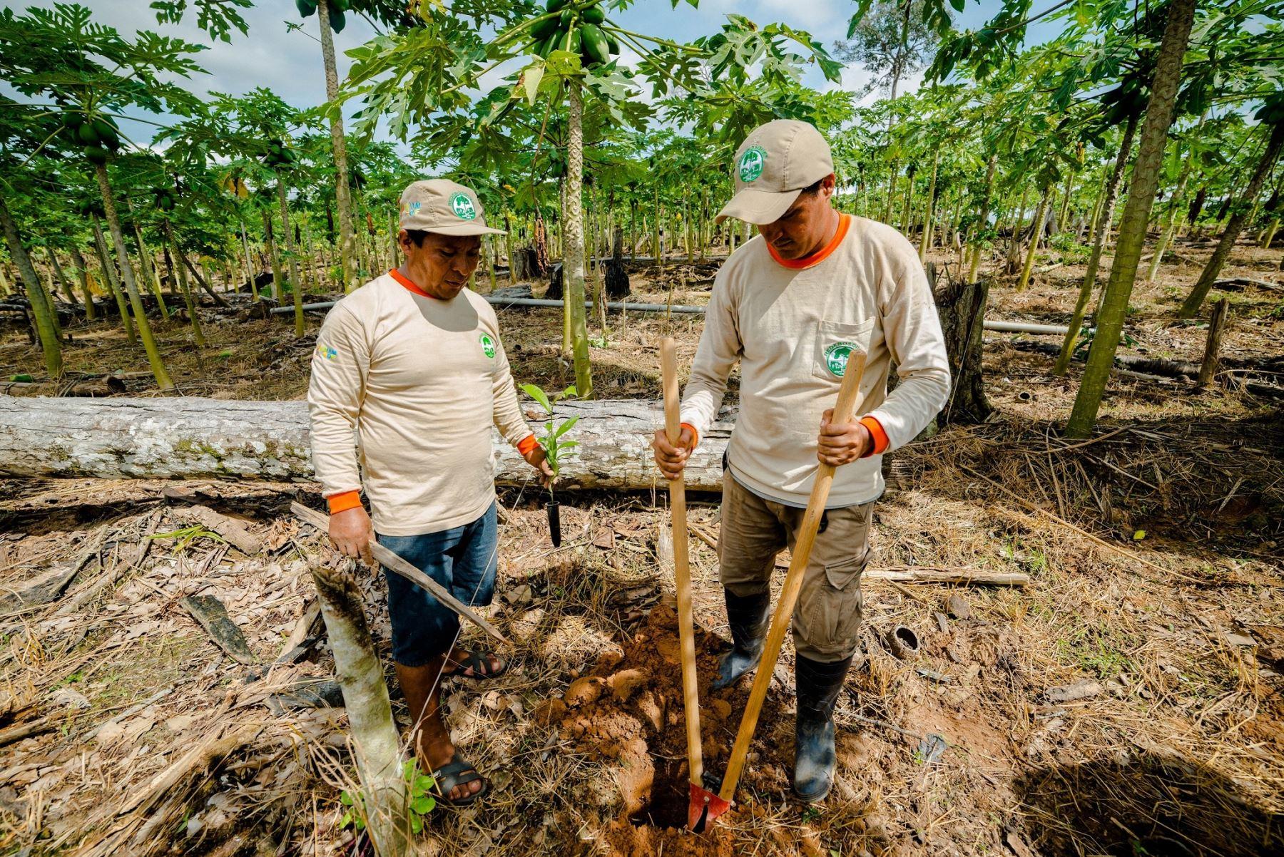 En el Día Mundial del Medio Ambiente conozca los esfuerzos del Minam+CAF para recuperar más de 7,600 hectáreas degradadas en Cusco, Madre de Dios y Puno. ANDINA/Difusión