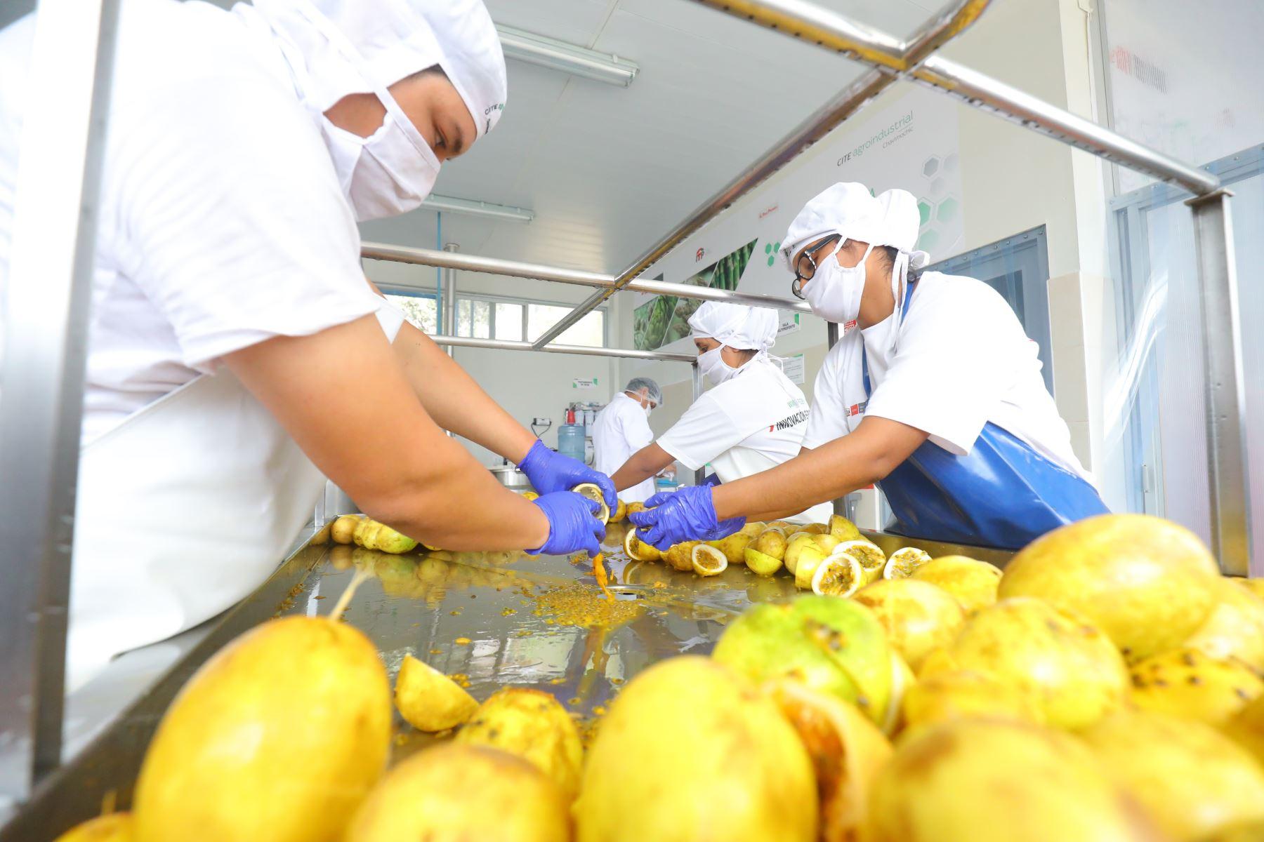 La actividad agroexportadora es la mayor generadora de empleo formal en La Libertad, afirmó la ministra de Trabajo, Sylvia Cáceres. ANDINA/Archivo