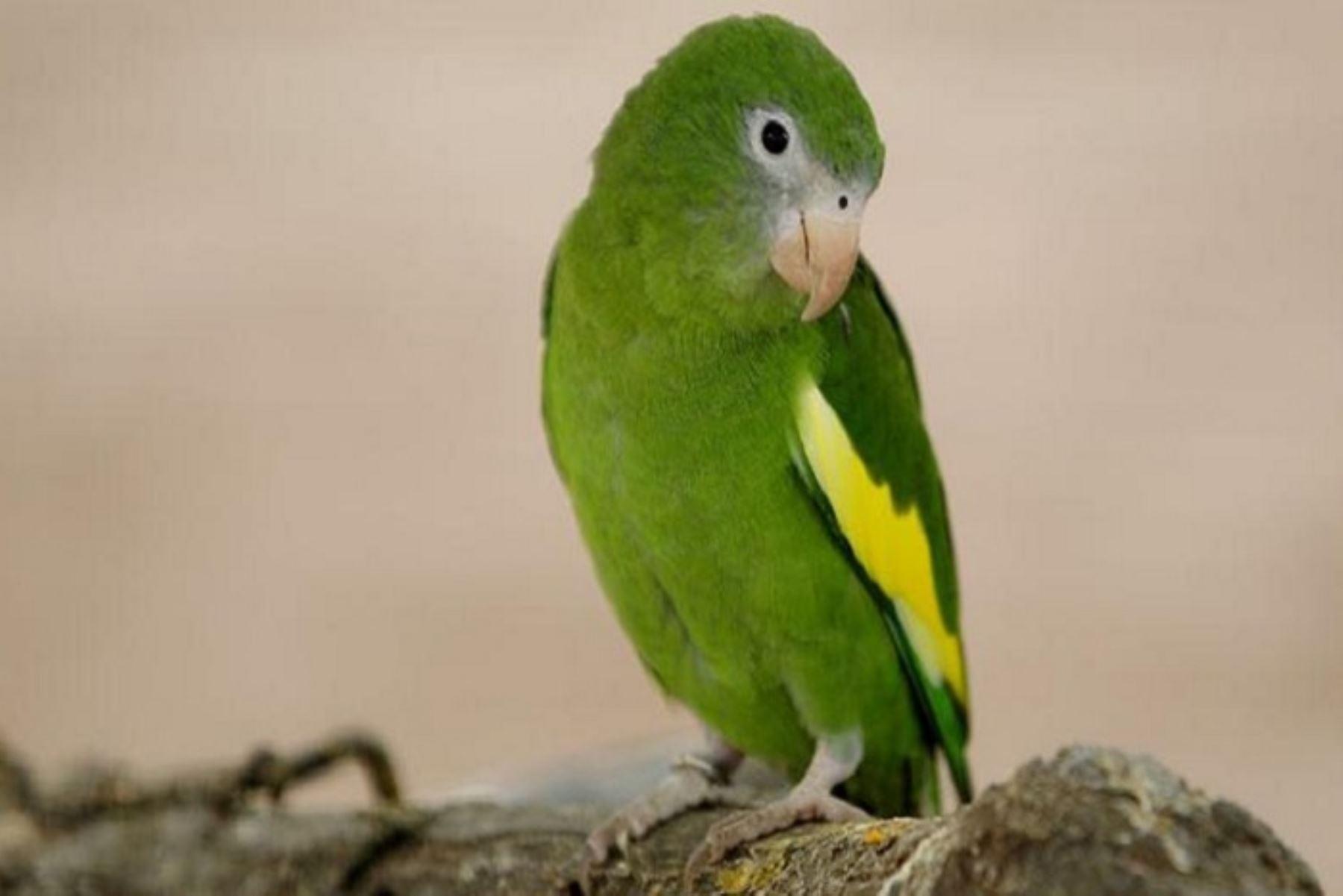 Más de 10,000 animales silvestres incautaron mayormente en 6 regiones