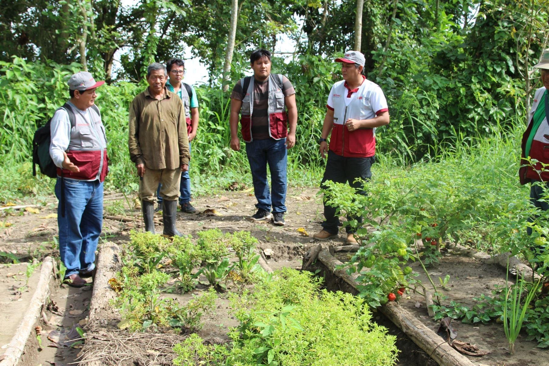 Foncodes impulsará proyectos productivos para familias de comunidades indígenas de la Amazonía peruana. ANDINA/Difusión