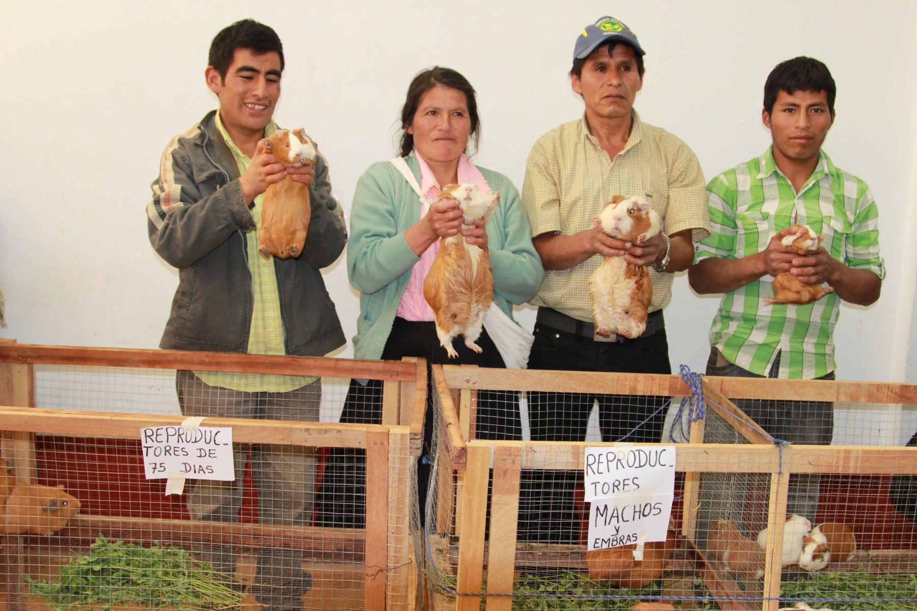 Destacan el impacto de emprendimientos, como la crianza de cuy, en la economía de la sierra y selva peruana. ANDINA/Difusión.