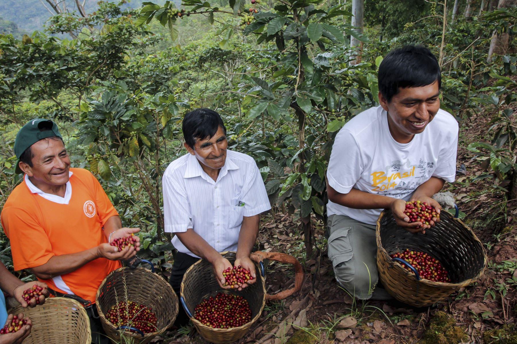 Productores de café.