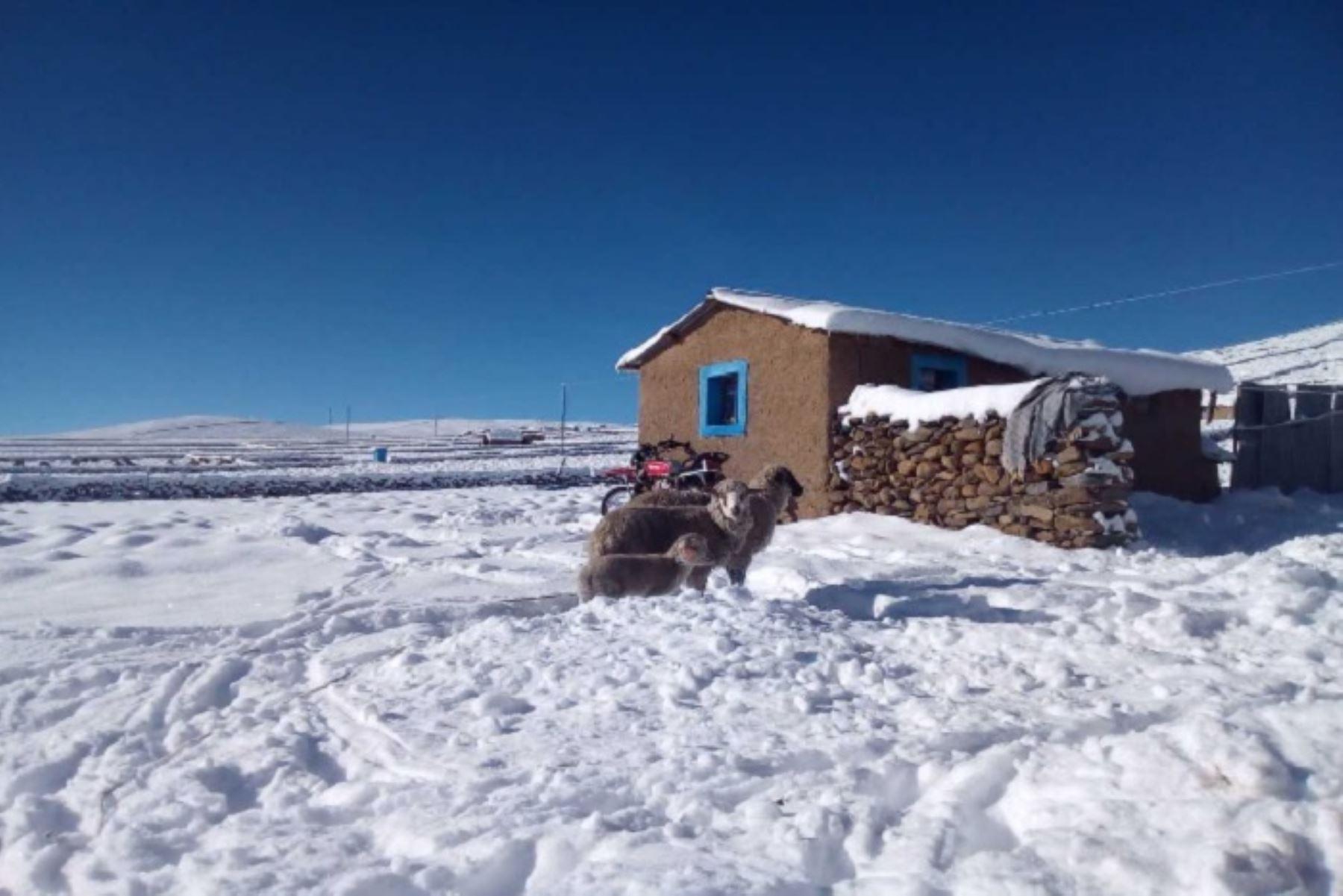 Desde la noche del viernes hasta la madrugada de hoy se registraron intensas nevadas en el distrito de Huacullani, provincia puneña de Chucuito, que superaron los 25 centímetros de altura. Los habitantes se ven afectados por la temperatura gélida y la mortandad de crías de alpacas y ovinos.