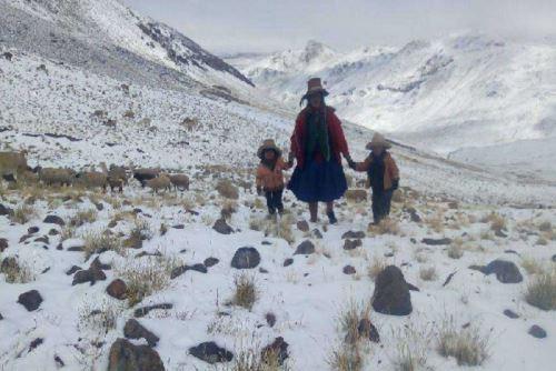 Reportan alpacas muertas en Chumbivilcas  y  Huacullani,  a causa de las fuertes  nevadas