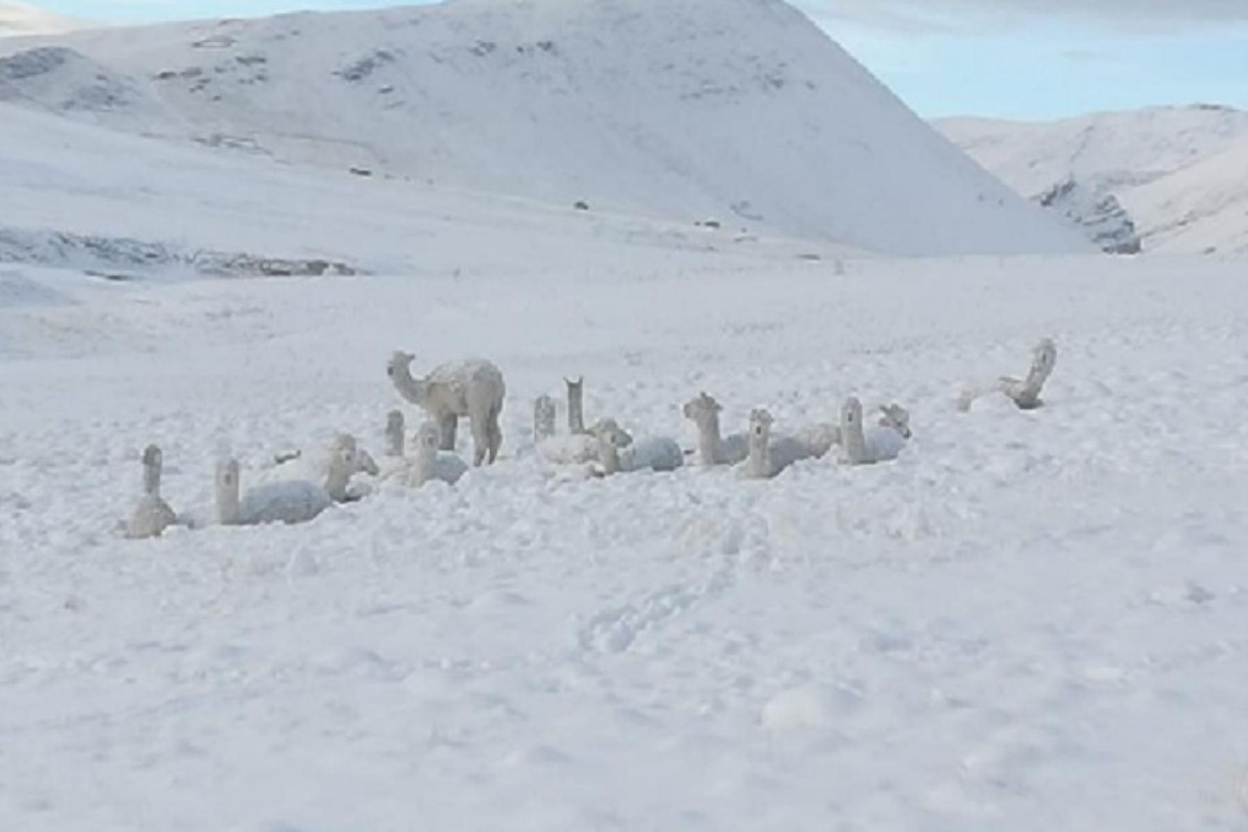 ¡Alerta! Bajas temperaturas afectarán a 70 provincias de la Sierra