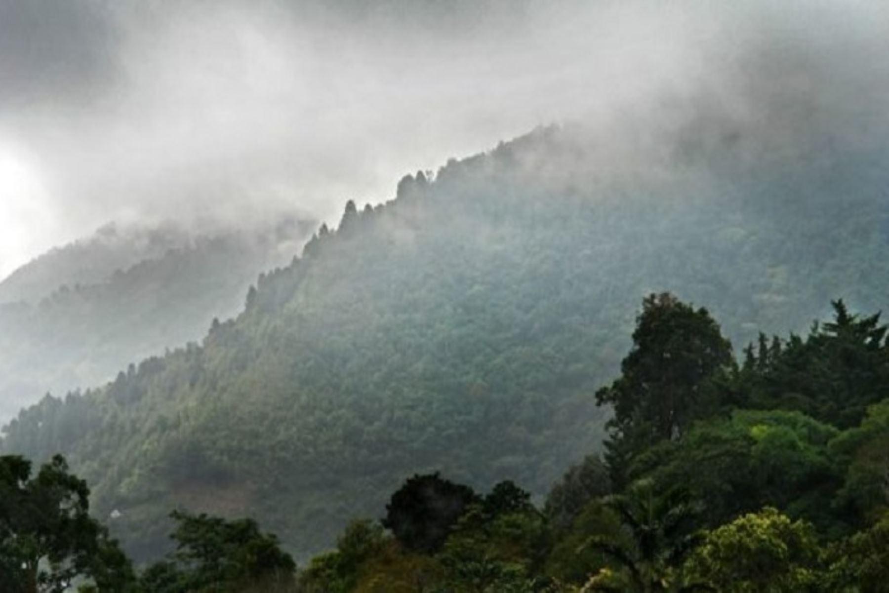Durante el periodo de friaje se registrará el descenso de la temperatura diurna con valores próximos a los 22 grados Celsius en la Selva sur y 27 grados Celsius en la Selva central. ANDINA/Difusión