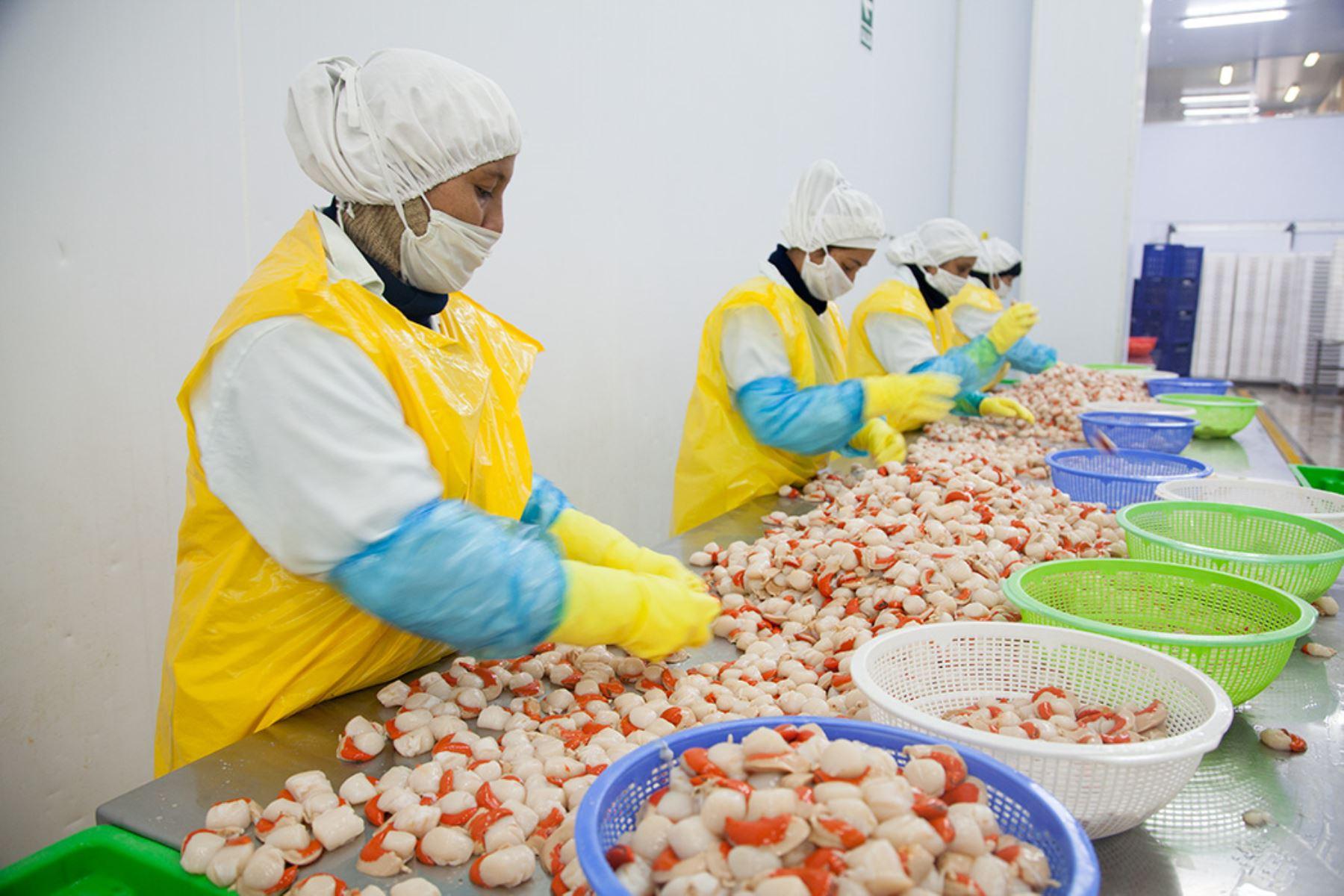 Sanipes amplía número de áreas de producción de conchas de abanico para exportación. ANDINA/Difusión