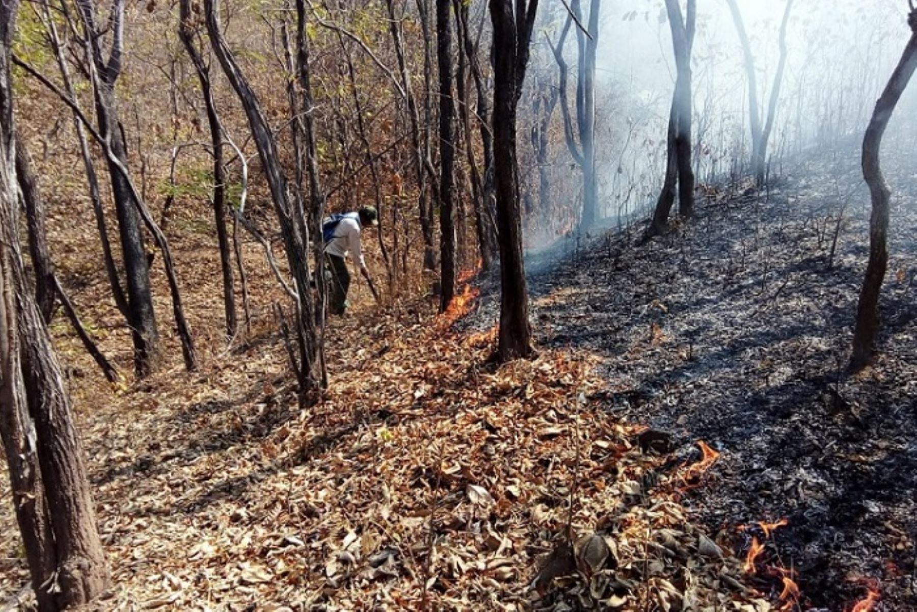 Controlan incendio en Reserva Nacional de Tumbes que dañó 5 hectáreas de pastizales