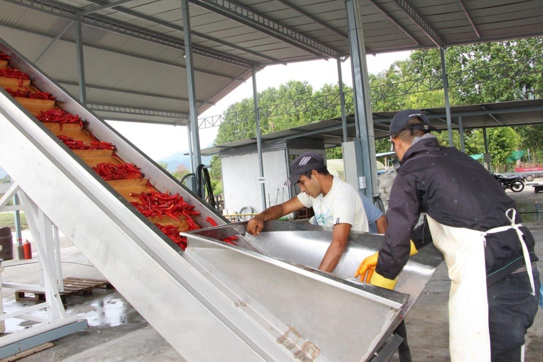 San Martín promueve inversión privada para el cultivo de ají. ANDINA