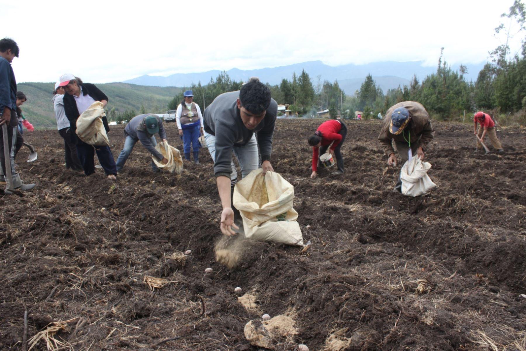 Agricultores. Foto: ANDINA/Difusión