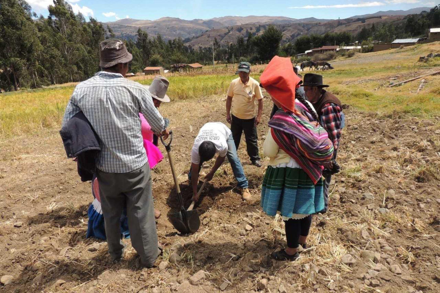 Sector agropecuario ANDINA/Difusión