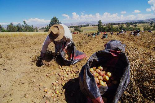 Pequeños agricultores podrán comprar guano de las islas a precio social