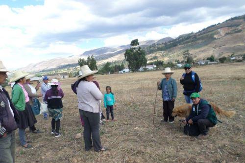 Productores de Cajamarca se capacitan en instalación de pastos mejorados. ANDINA/Difusión