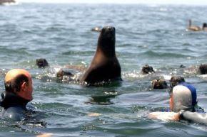 Islotes Palomino: el área natural protegida que debes visitar frente al Callao. Foto: ANDINA/Difusión.