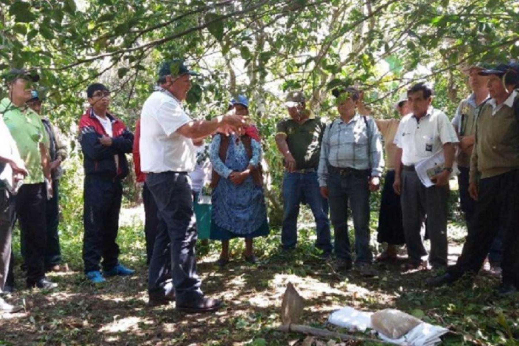Más de 80 productores de frutas y café del distrito de San Pedro de Putina Punco, en la provincia puneña de Sandia, mejorarán la calidad y productividad de sus cultivos gracias al guano de las islas que el Ministerio de Agricultura y Riego (Minagri), a través de Agro Rural, distribuye y comercializa en todas las regiones del país.