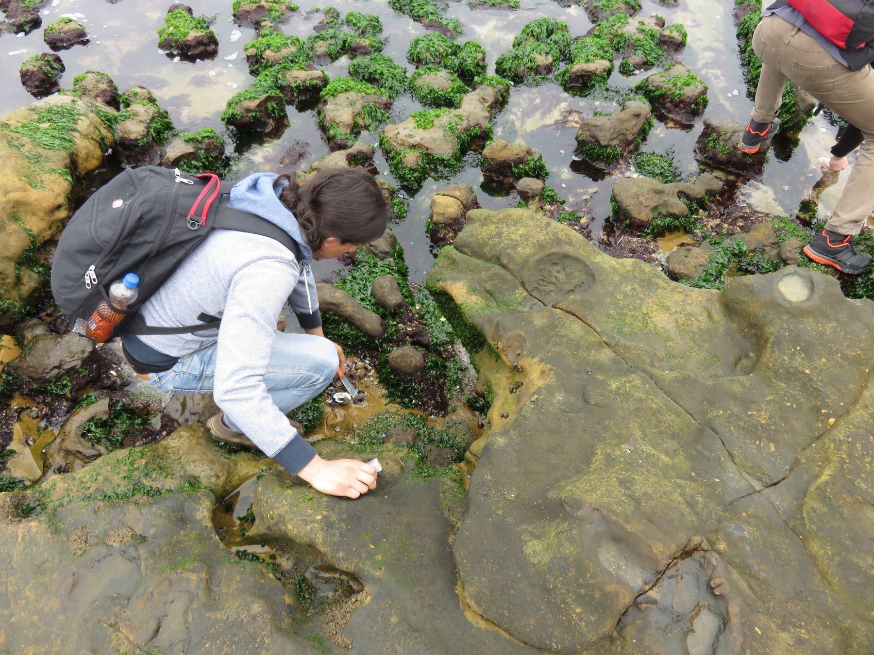 Toma de muestras en bahía de Paracas, Ica. Foto: UNT