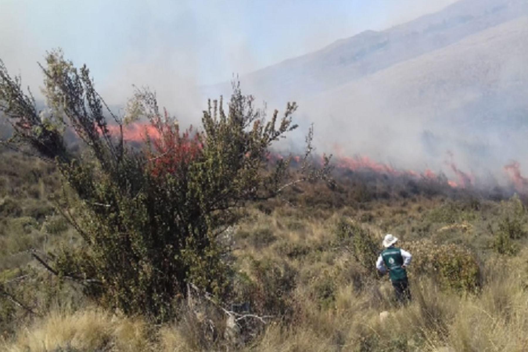 El incendio forestal que se ayer se inició ayer en el sector de Talamolle, región Moquegua, y se extendió hasta el distrito arequipeño de Polobaya, avanza hacia el bosque de queñuales, ubicado en las faldas del volcán Pichu Pichu, advirtió el Servicio Nacional Forestal y de Fauna Silvestre (Serfor).