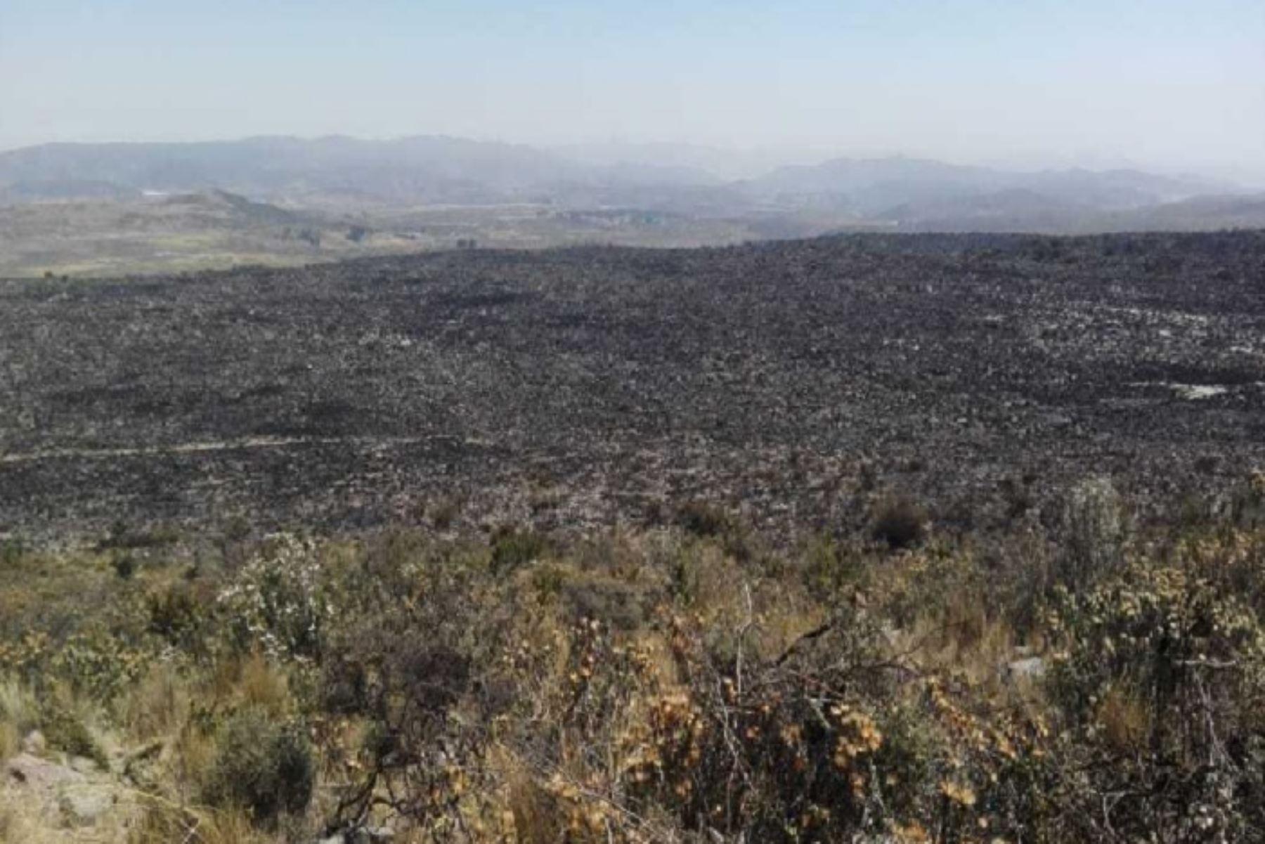 Alrededor de 2,000 hectáreas de cobertura natural vegetal dañó en Arequipa y Moquegua el incendio forestal que se logró controlar luego de 4 días de denodados esfuerzos por parte de las distintas instituciones del Estado, autoridades y pobladores, informó el Ministerio de Agricultura y Riego (Minagri).