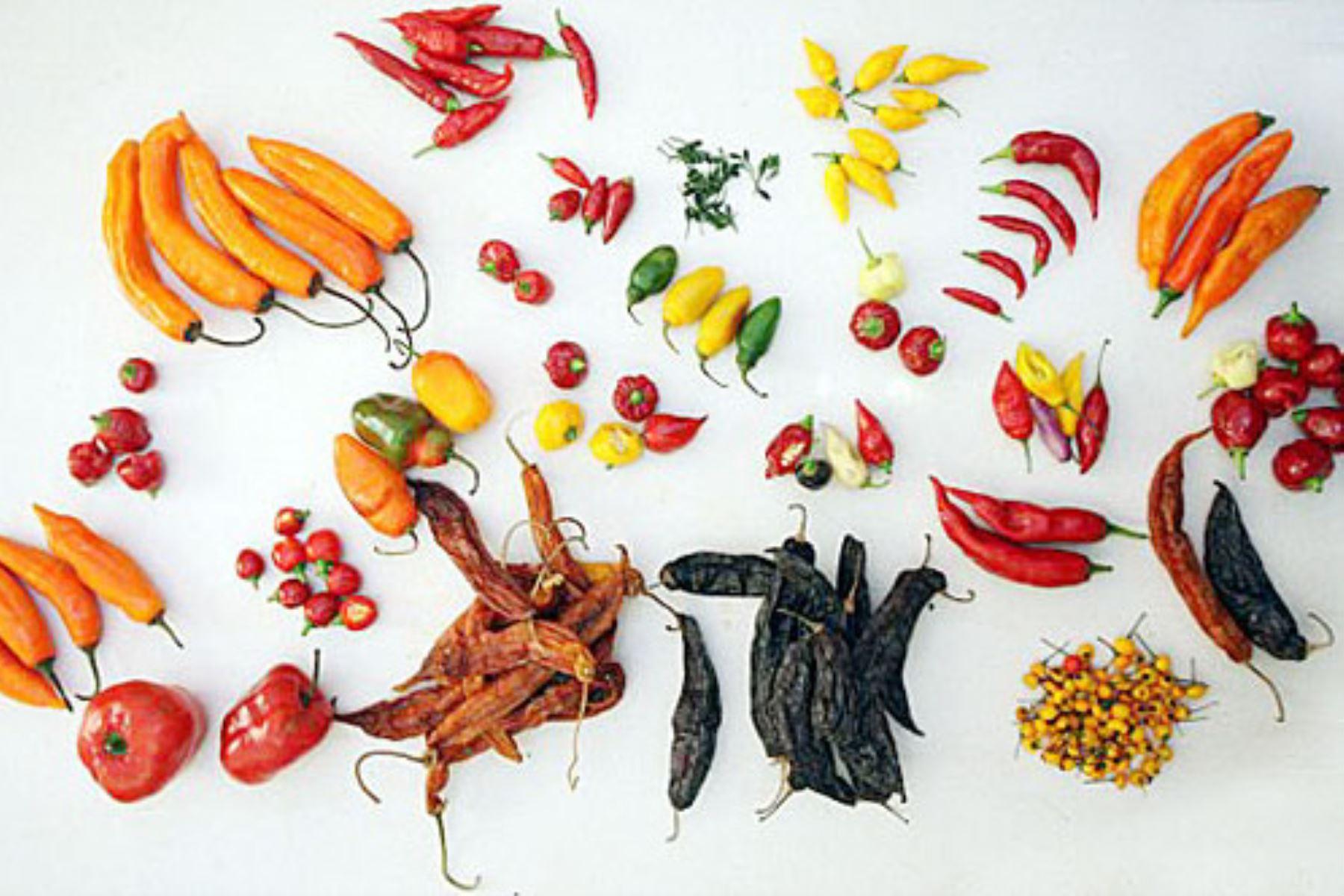 La gastronomía peruana no existiría sin la presencia del ají. Y el territorio nacional ha sido bendecido con una gran diversidad de ajíes que se han convertido en embajadores de las cocinas regionales, gracias a la labor de los agricultores que los cultivan desde tiempos ancestrales y a una tradición culinaria que aporta identidad.