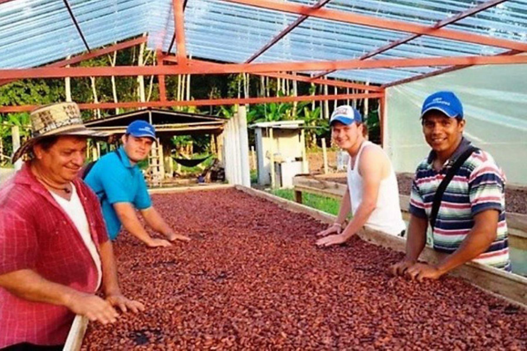 San Martín apuesta por el cacao e impulsa plan que generará S/ 88 millones de ingresos en próximos 3 años. ANDINA/Difusión