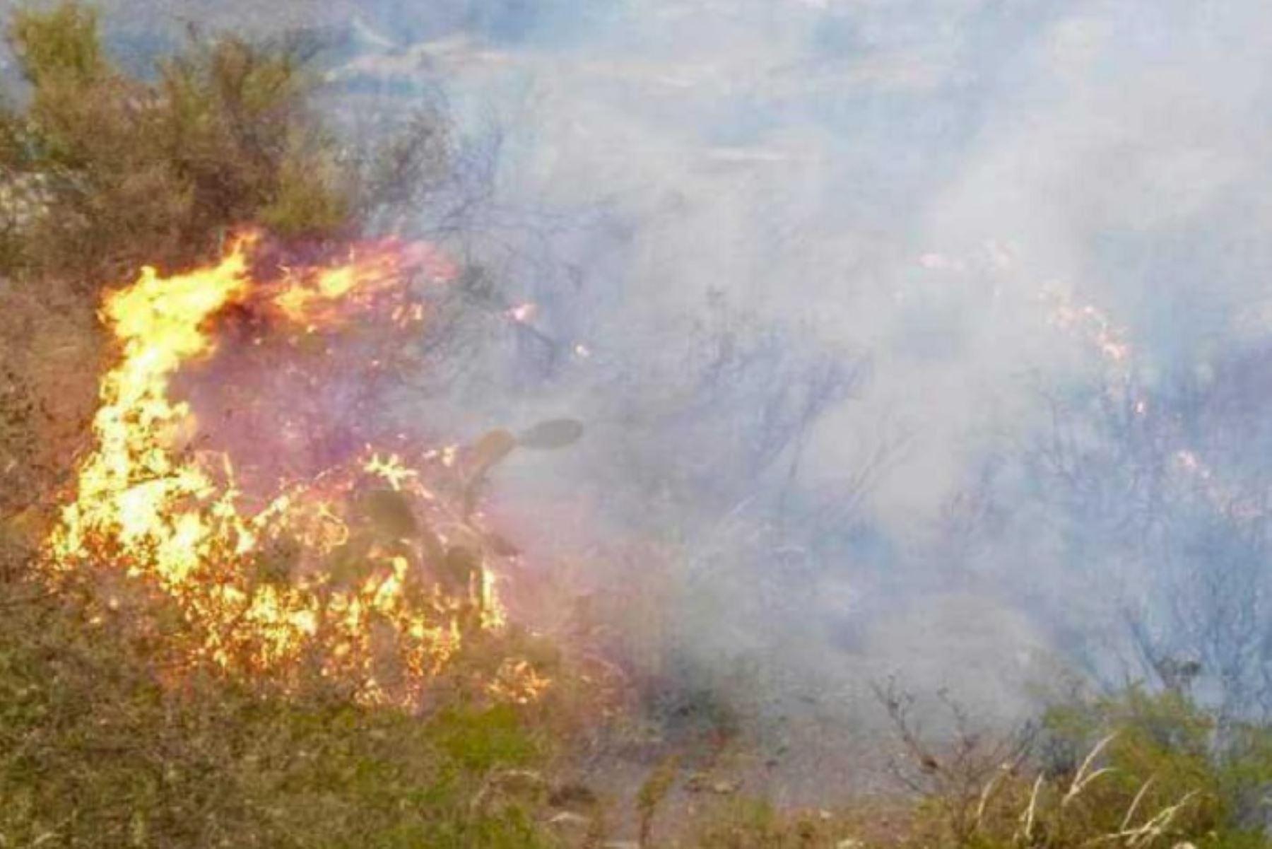 Un incendio forestal de grandes proporciones se registra en el sector conocido como Ojo de Orihuela, en el distrito de Pocsi, provincia y región Arequipa, cerca de la zona donde se suscitó el más reciente siniestro que afectó más de 1,500 hectáreas de pastos naturales. ANDINA/Difusión