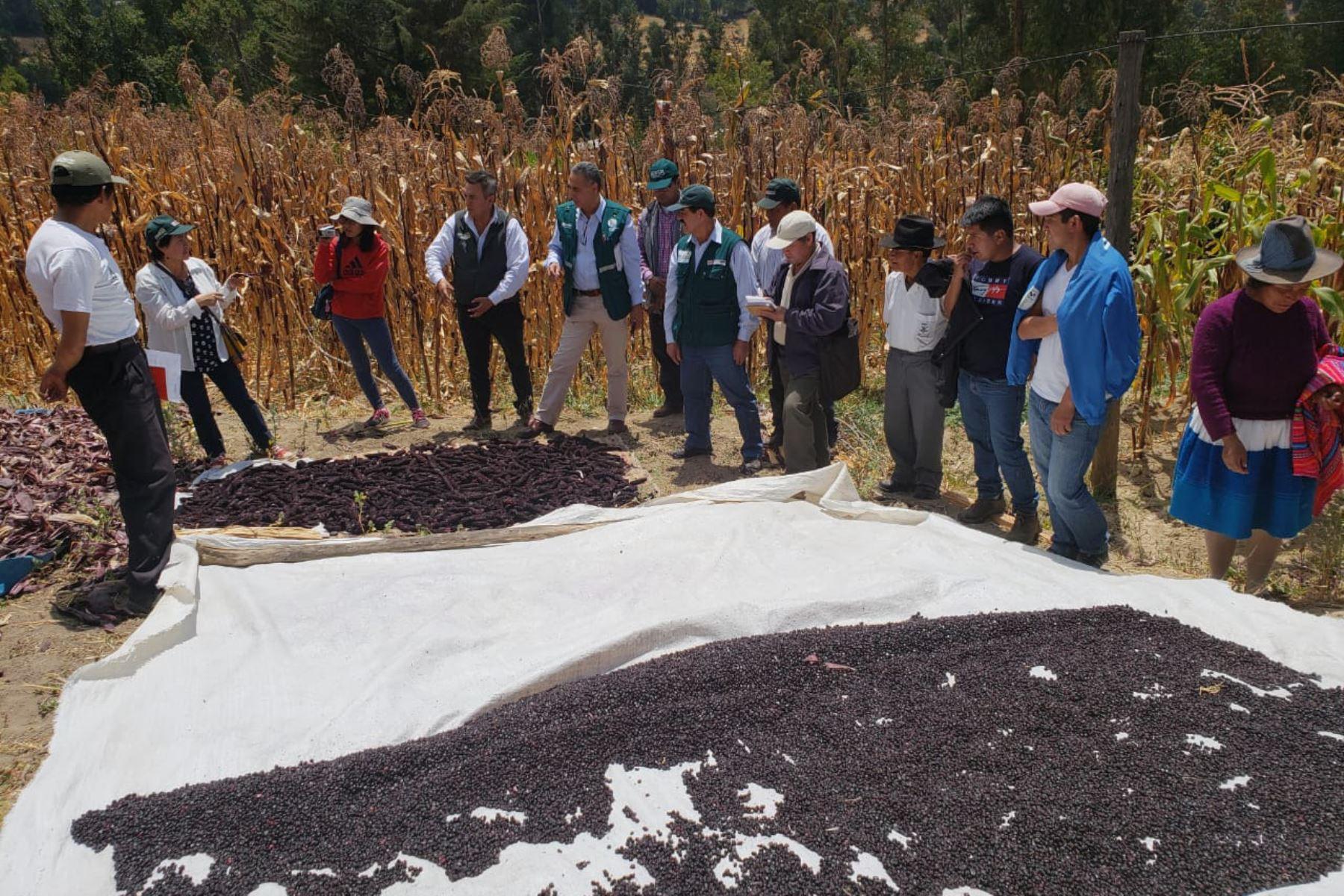 Con guano de las islas mejoran producción de maíz morado en Áncash, ANDINA/Difusión