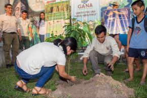 Reforestan la ciudad de Iquitos con árboles nativos de la Amazonía. ANDINA/Difusión