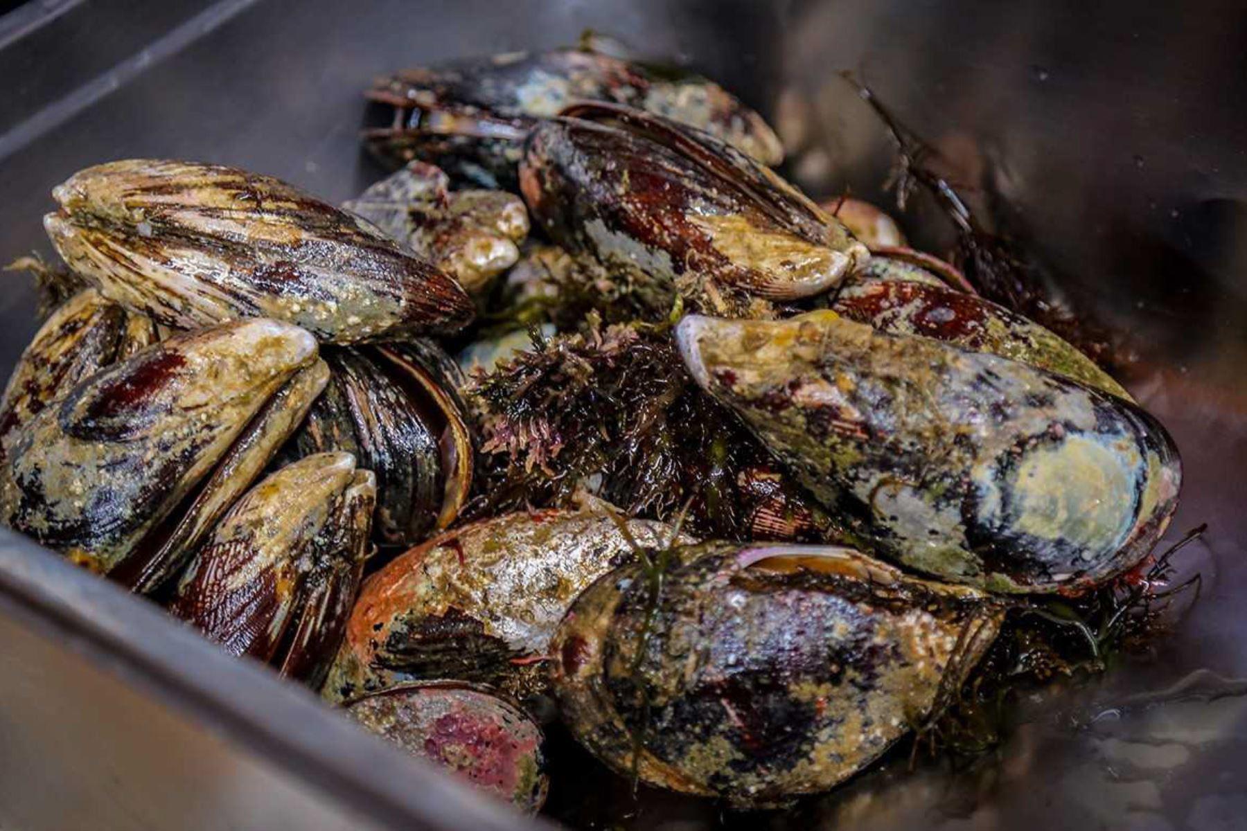 El Organismo Nacional de Sanidad Pesquera (Sanipes) autorizó la extracción del recurso choro (Aulacomya atra) y de otros moluscos bivalvos, del área de producción Pozo de Lizas ubicada en Ilo, región Moquegua.