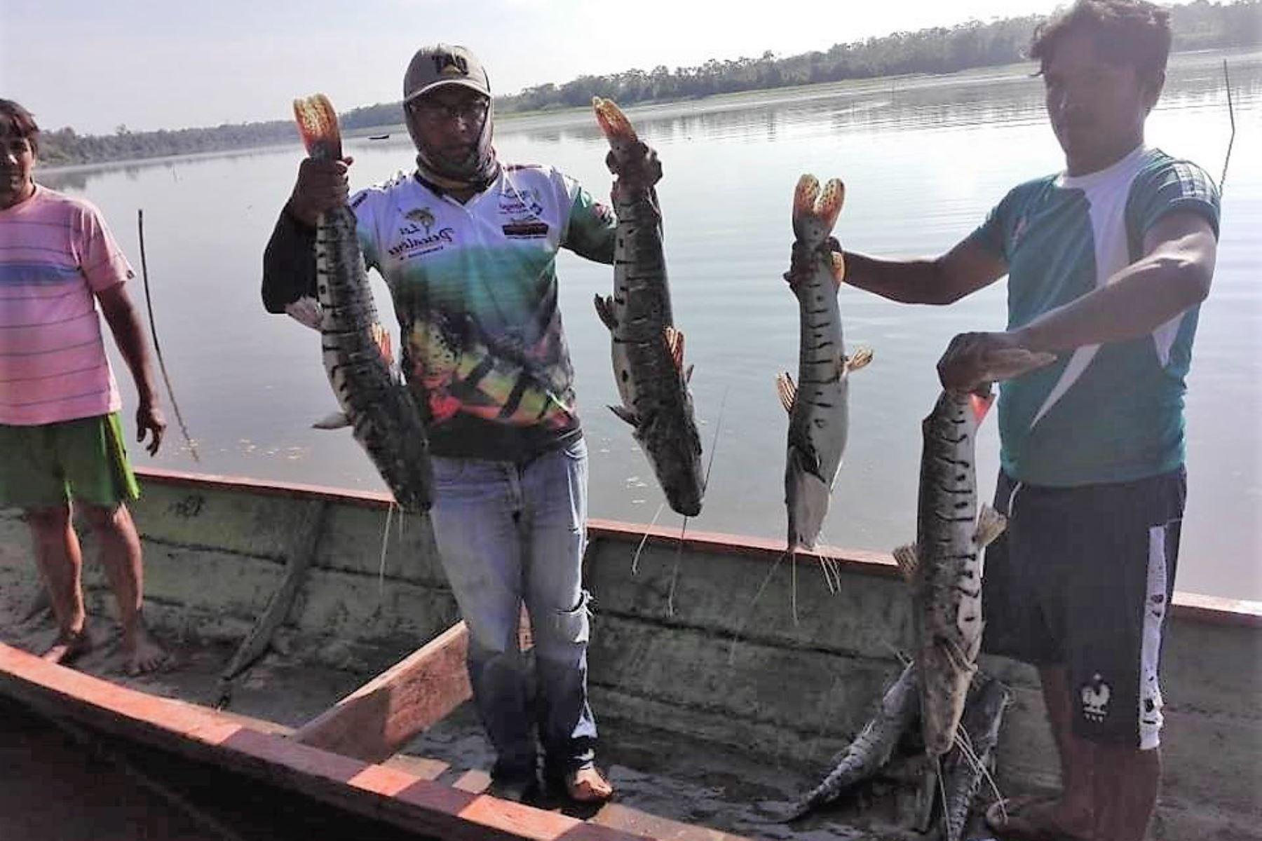 Promueven el cultivo de peces amazónicos en lagunas de San Martín. ANDINA