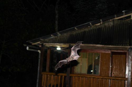 Parque Nacional Tingo María es reconocido internacionalmente como área importante para la conservación de murciélagos