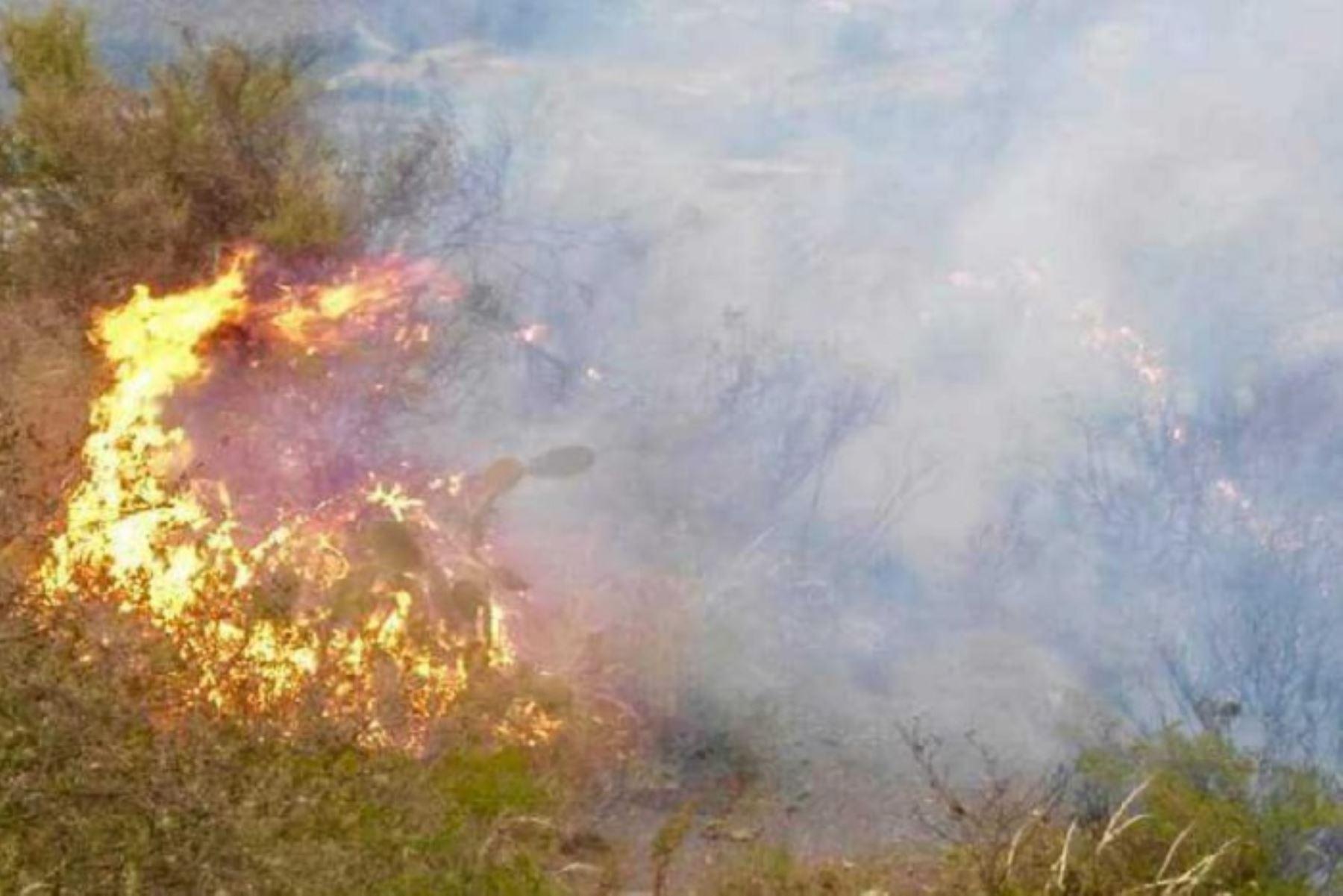 Hasta 30 incendios forestales se han reportado en la región de Áncash