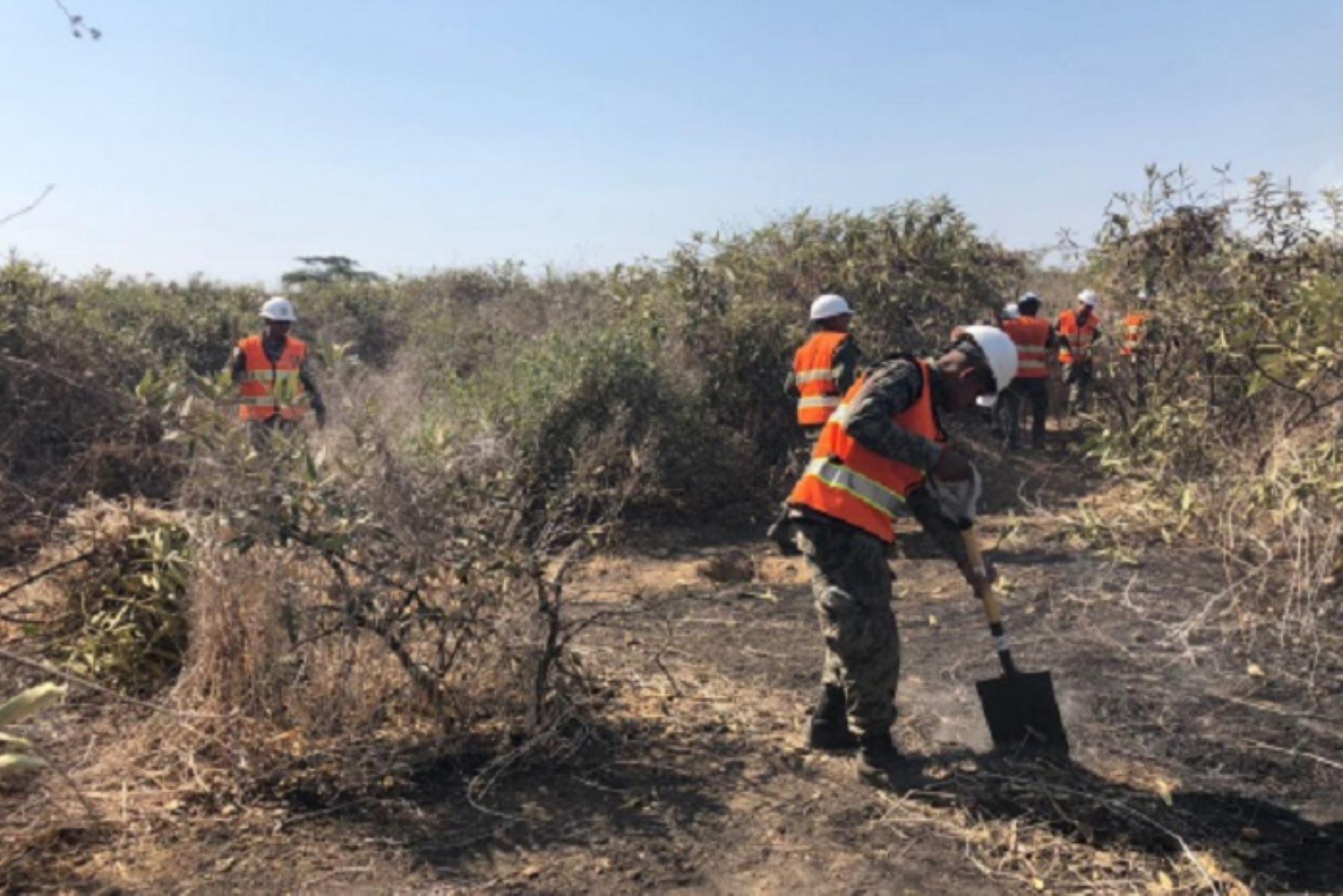 El Instituto Nacional de Defensa Civil (Indeci) informó que hoy se reiniciaron, con la participación de 50 efectivos del Ejército, las labores de extinción del incendio forestal que se registra desde el 22 de setiembre, en la zona del Bosque de Pómac, ubicado en el distrito de Pítipo, provincia de Ferreñafe, región Lambayeque. ANDINA/Difusión