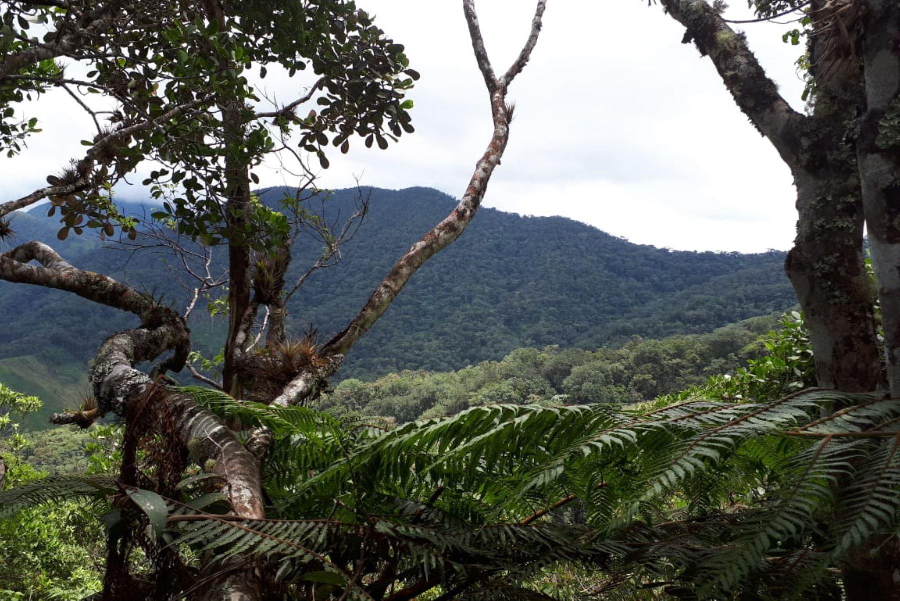 Cajamarca protegerá especies amenazadas con Área de Conservación Regional. ANDINA/Difusión