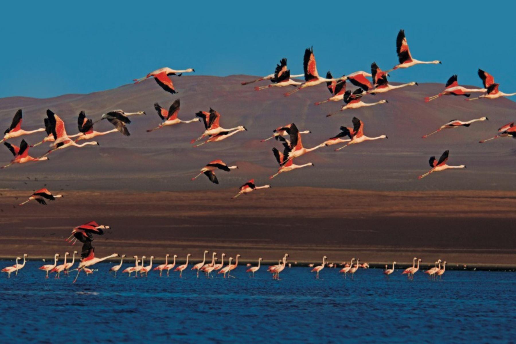 Reserva Nacional de Paracas: paisaje