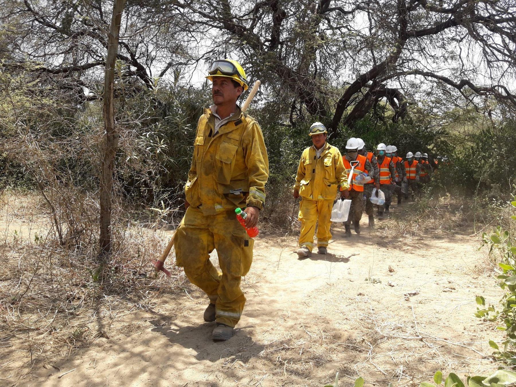 En el control del incendio forestal en el Santuario Histórico Bosque de Pómac participaron guardaparques bomberos forestales del Sernanp, brigadistas comunales, miembros del Ejército y de la Policía Nacional, bomberos.