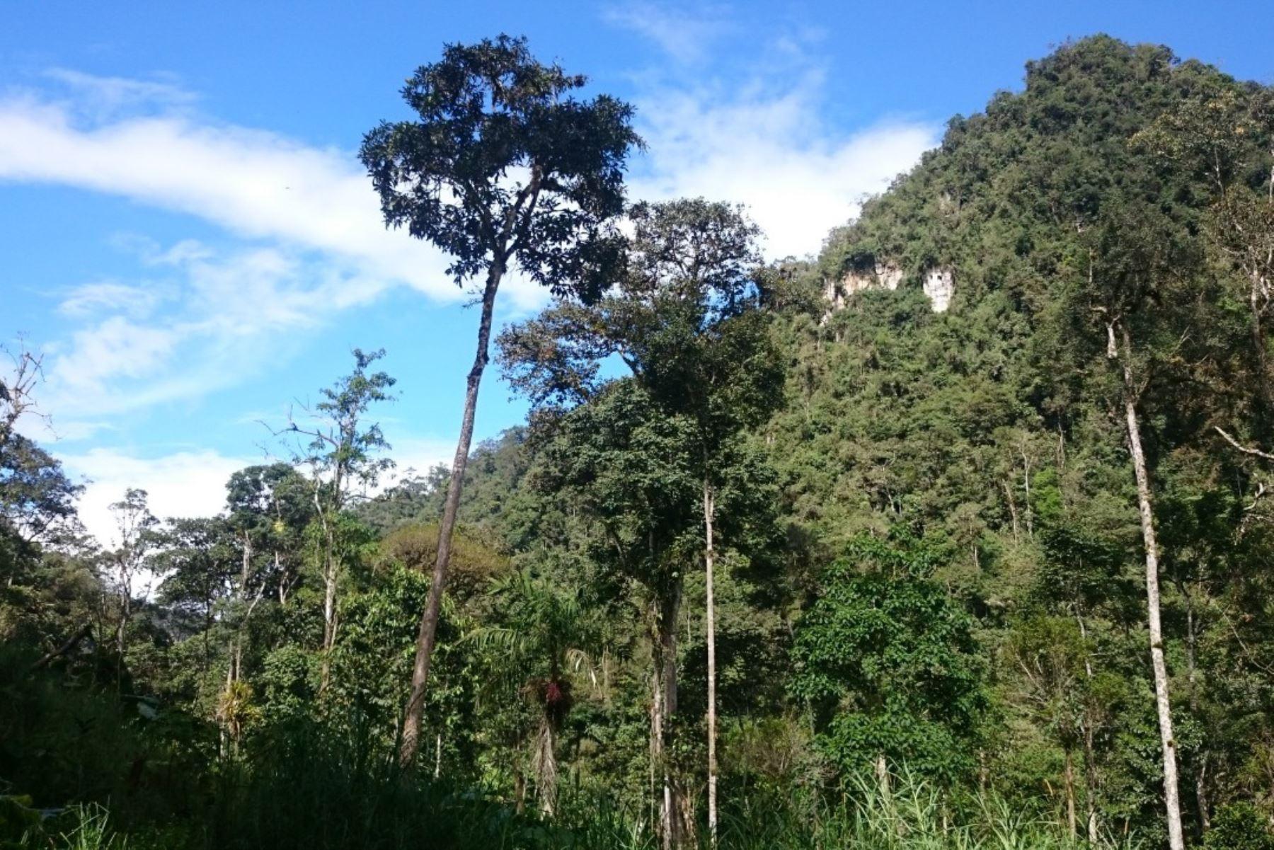 La región Amazonas cuenta desde la fecha con su decimocuarta área de conservación privada (ACP) denominada Monte Puyo (Bosque de Nubes).