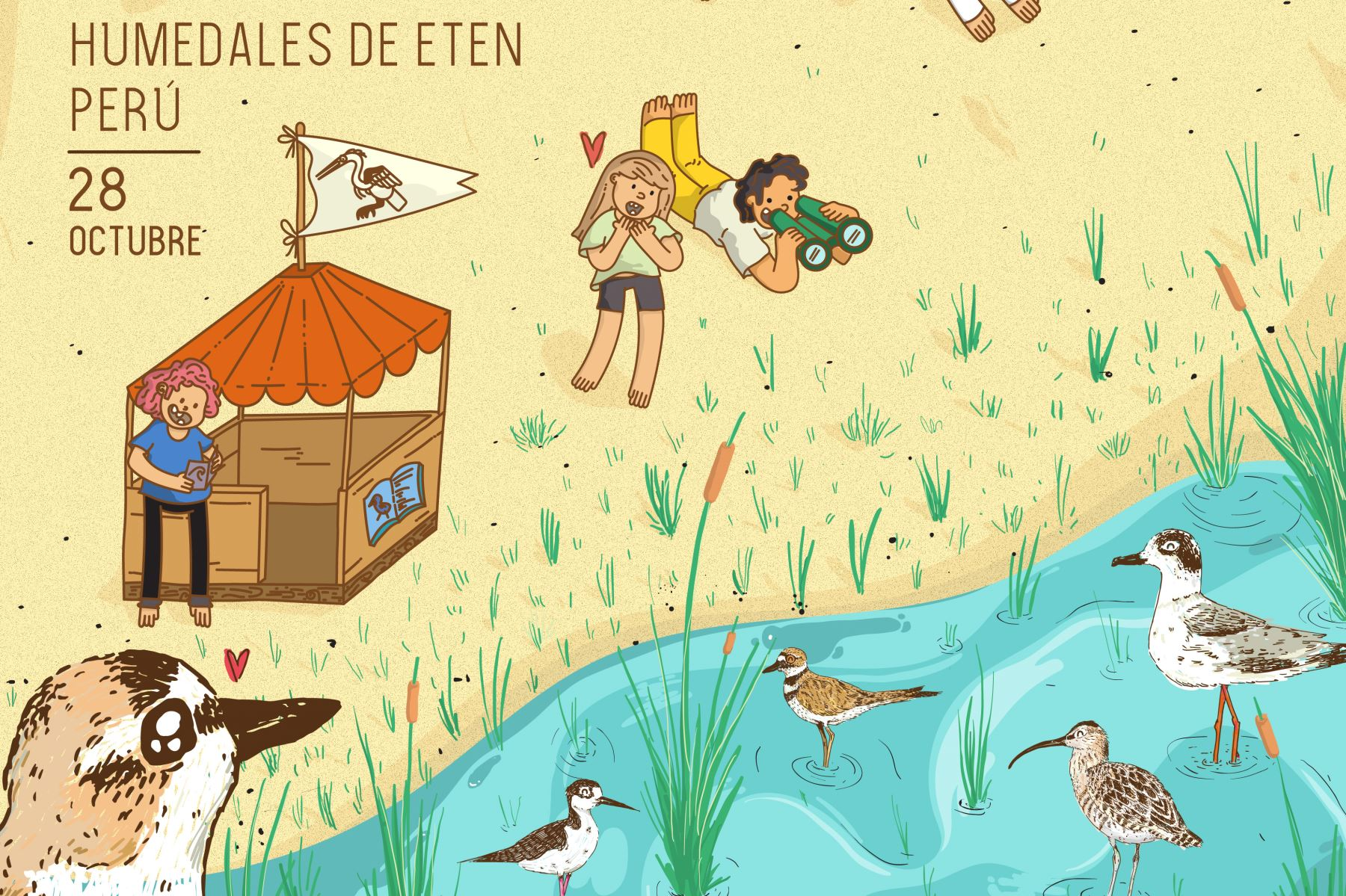 """El domingo 28 de octubre se efectuará el II Festival de Aves Playeras y Humedales de Eten """"Alas que nos Unen"""", en el parque principal del distrito de Ciudad Eten."""