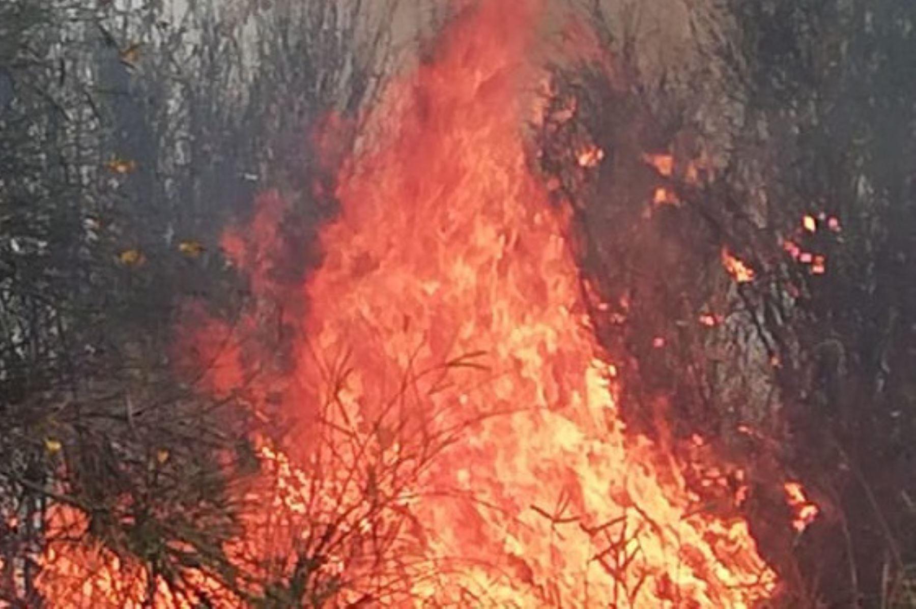 Esta tarde se reportó un incendio forestal en el distrito de Jangas, provincia de Huaraz,región Áncash.