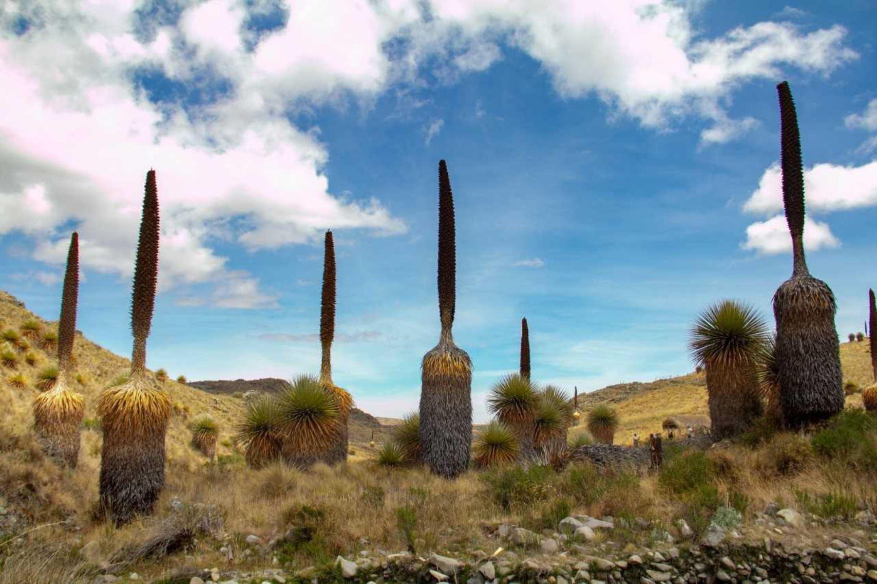 Santuario Nacional de Calipuy festeja efeméride como ejemplo de conservación. ANDINA/Difusión