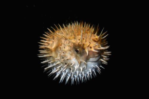"""""""Misterios de las profundidades"""", colección de fotografías submarinas"""