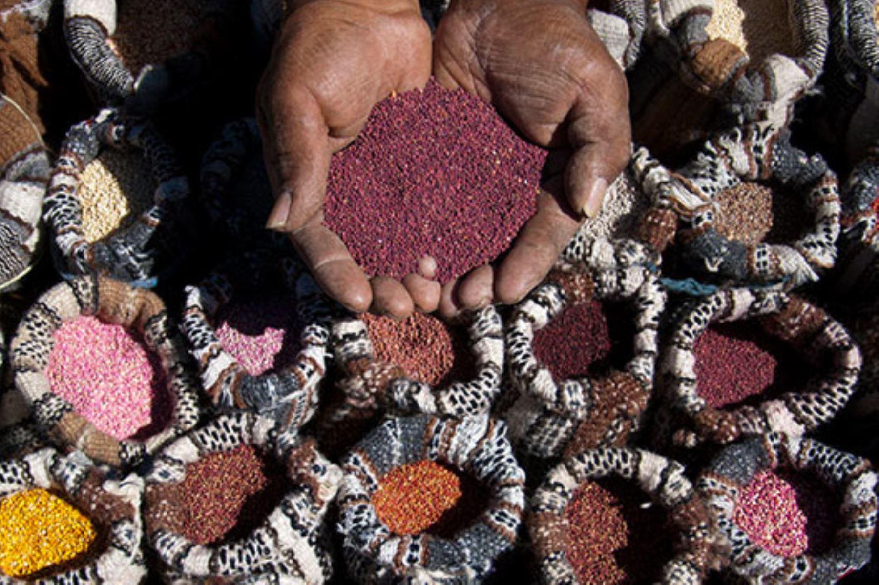 Quinua: conoce las bondades nutricionales y variedades de este superalimento peruano. ANDINA/Difusión