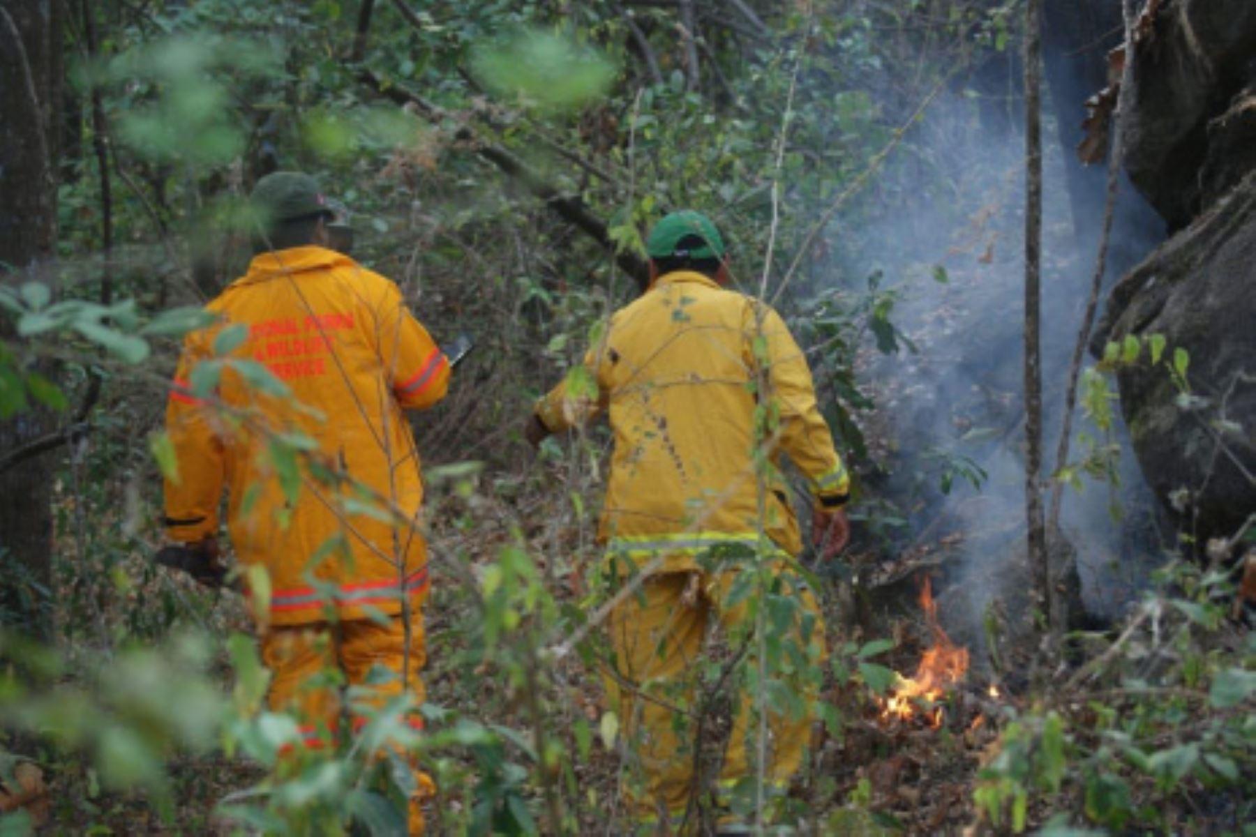 Incendio forestal en el distrito de Pampas de Hospita, región Tumbes, ha afectado, hasta el momento, 300 hectáreas de cobertura natural.