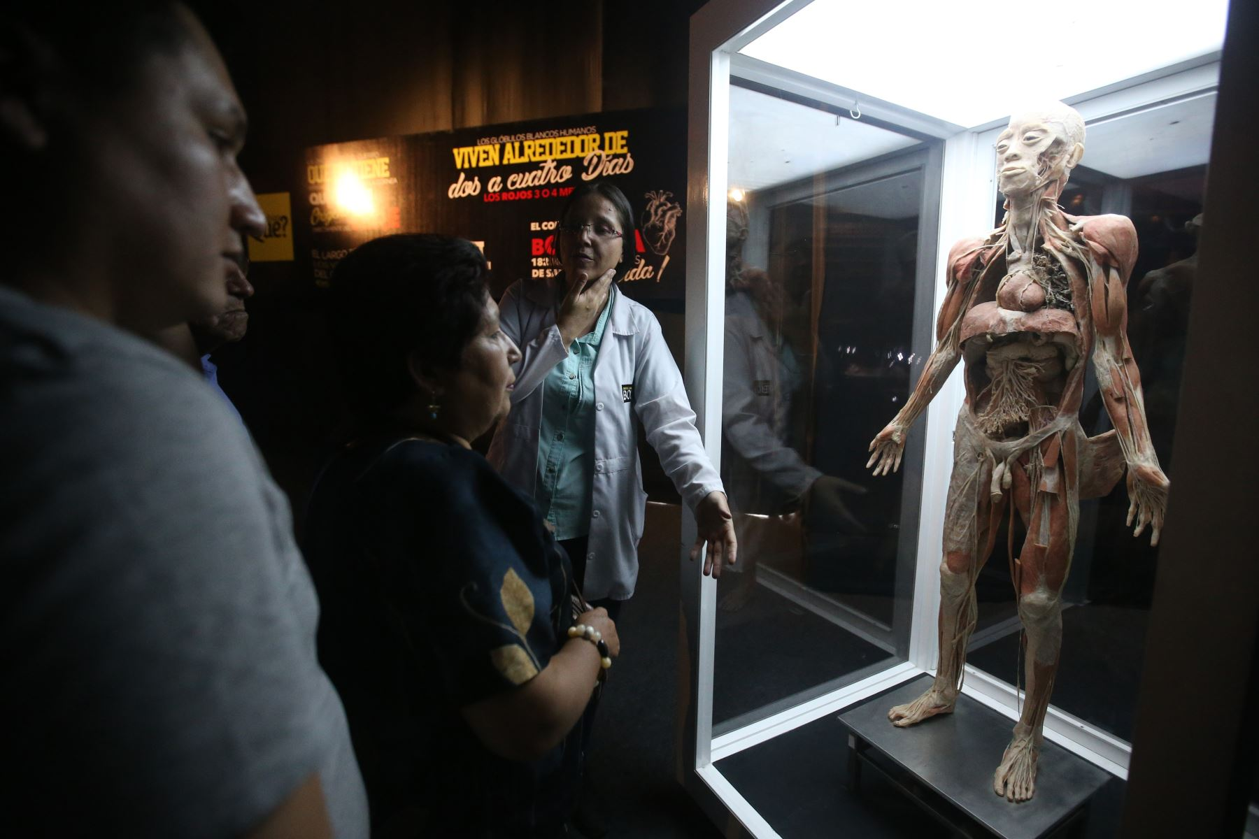 Exposición de Cuerpos Humanos en Jockey Plaza. Foto: ANDINA/Vidal Tarqui