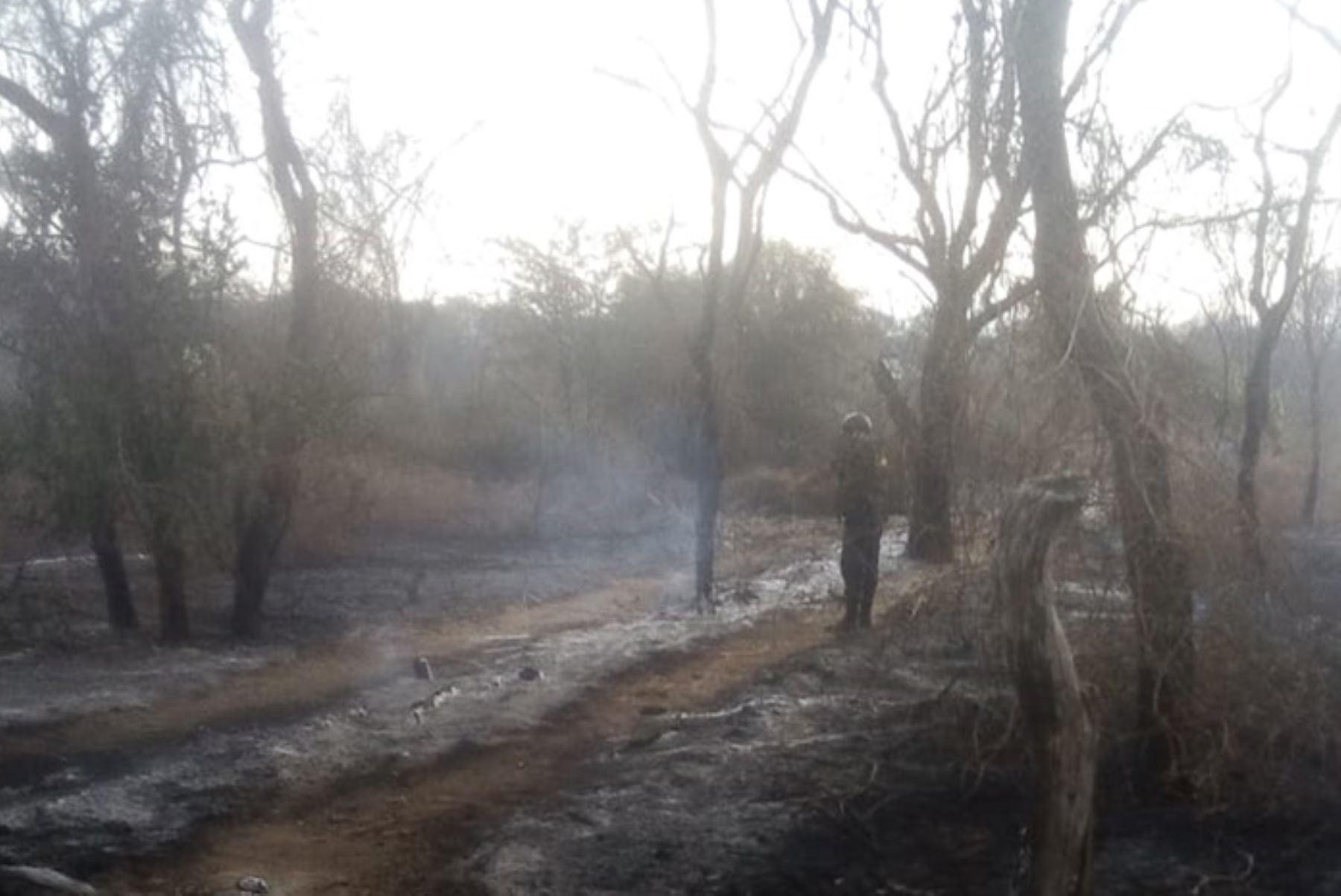 Bomberos y personal de serenazgo luchan para controlar incendio forestal en el caserío Humedales del distrito de Motupe, región Lambayeque.