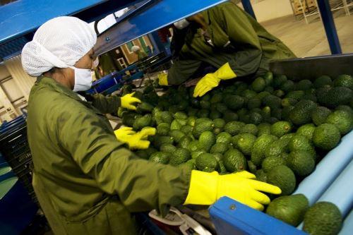 Agroexportaciones. Foto: ANDINA/Difusión