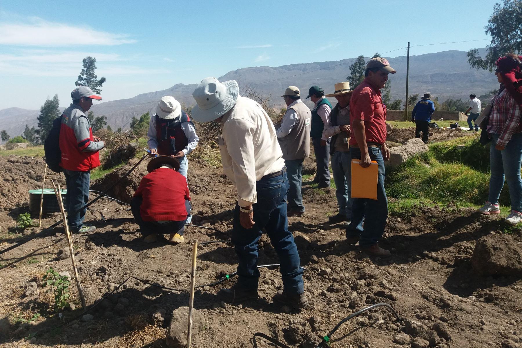 Agricultores. Foto: ANDINA/Difusión.